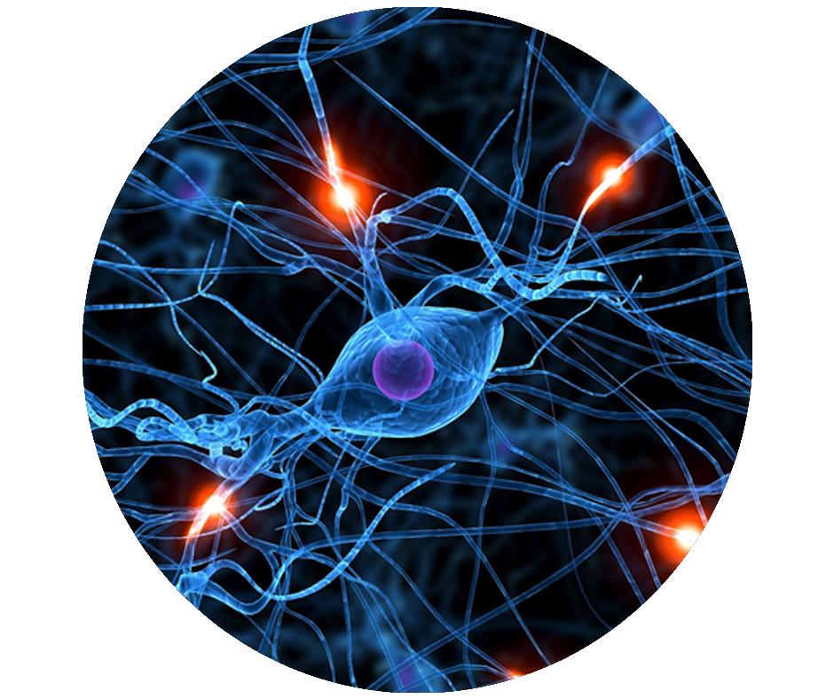 epilepsia-y-discapacidad